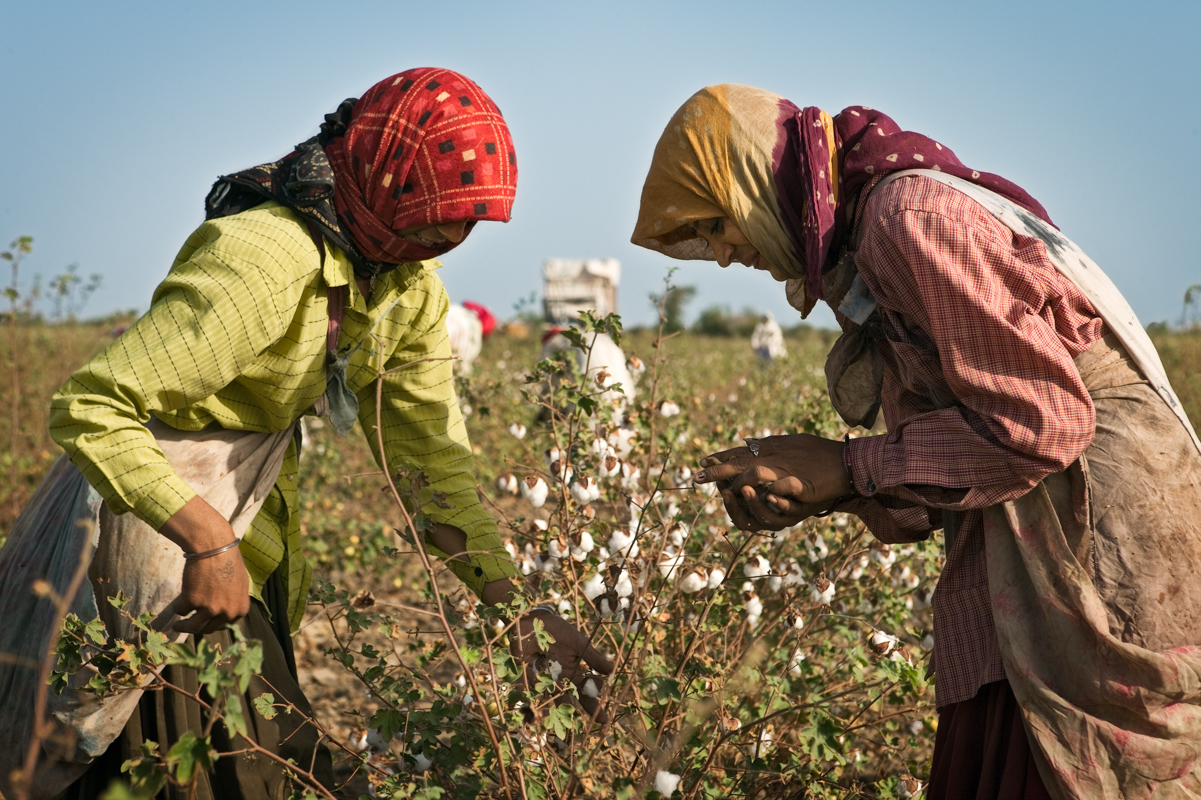 red-cotton-harvesters.jpg